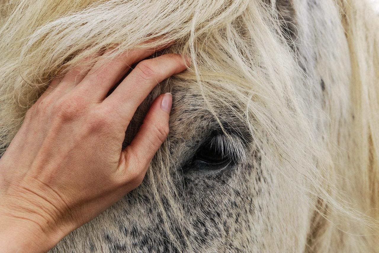 Kärleken till hästar är tidskrävande